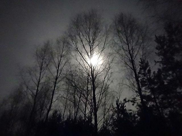 Wald bei Nacht